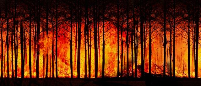forest-fire-3836834_640.jpg