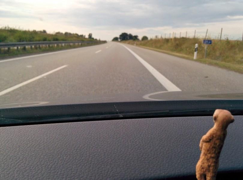 Erdmännchen im Auto