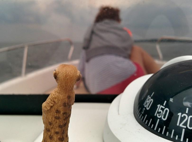 Erdmännchen auf Boot