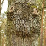 Baum mit Beulen