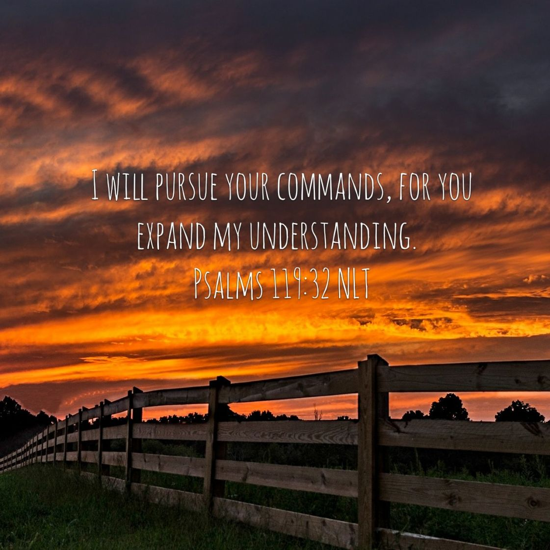 I will pursue your commands, for you expand my understanding. - Psalms119:32 NLT