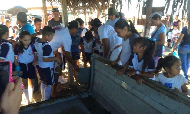 Se realiza primera liberación de tortugas marinas del campamento El Habillal