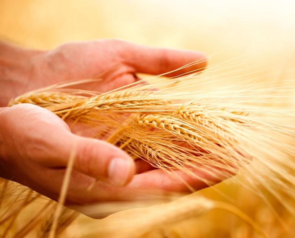 Oro di Macina: tutta la genuinità dei prodotti di una volta