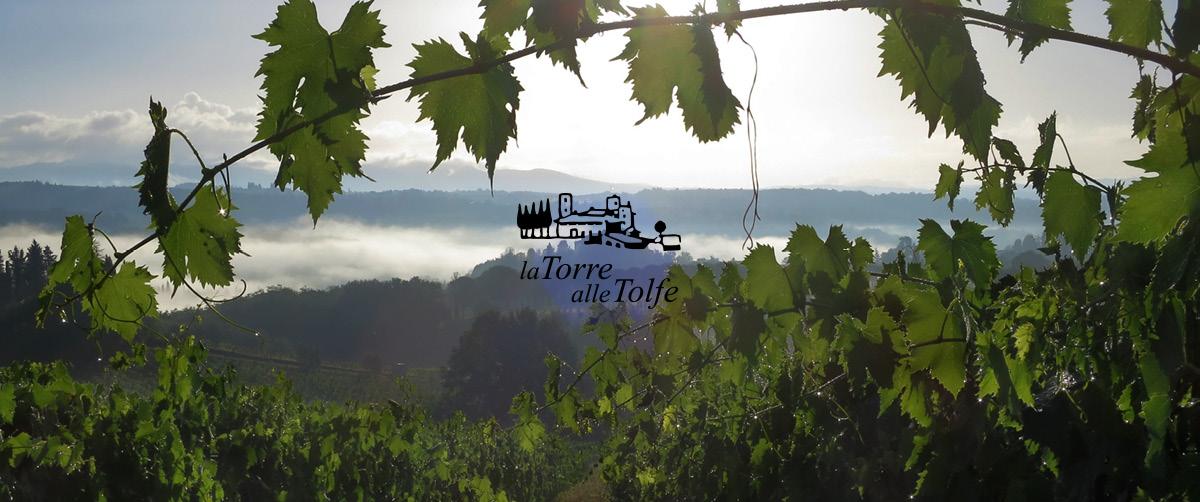 Stefano Albenga racconta il Chianti Torre alle Tolfe: storia, amori, ritorni e 100 ettari.