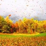 Leaves-In-Wind