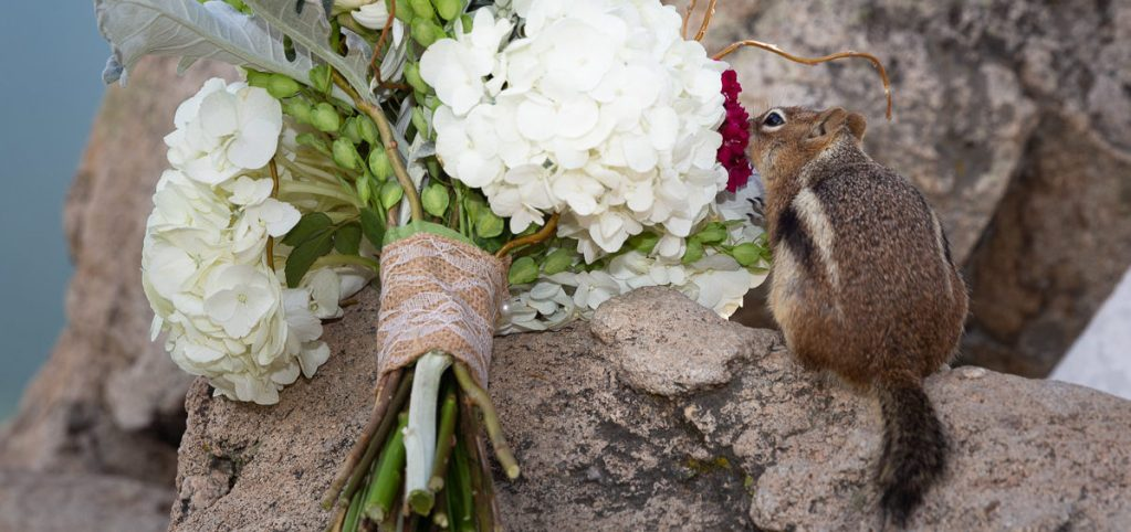 07-Chipmunk-and-bouquet-e1578770163143.jpg