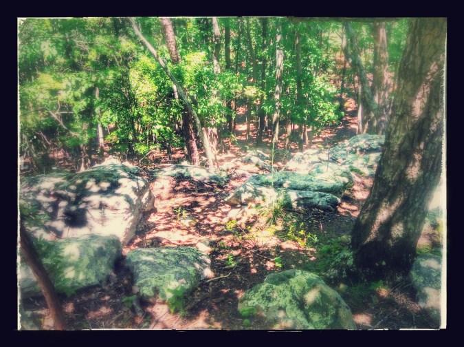 Lichen covered rocks at Kennesaw