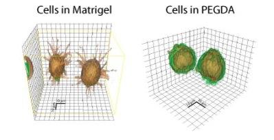 gel_cells1