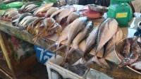 Bulan Suci Ramadhan, Harga Ikan di Anaiwoi Masih Relatif Normal
