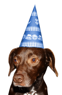 birthday party dog