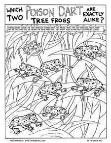 Poison-Dart-Tree-Frog-Activity-350