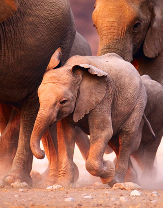 elephant printables