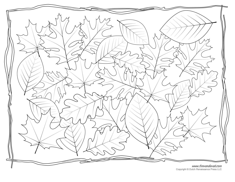 Leaf Templates & Leaf Coloring Pages for Kids | Leaf ...