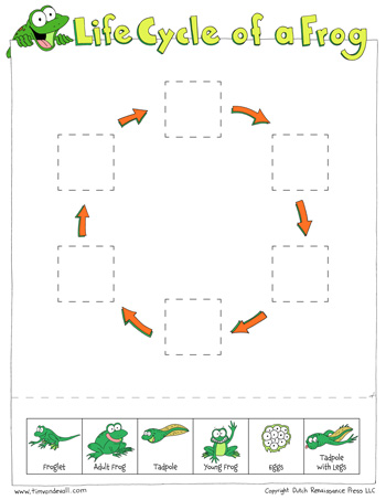 Life Cycle Of A Frog Worksheets Cut And Paste