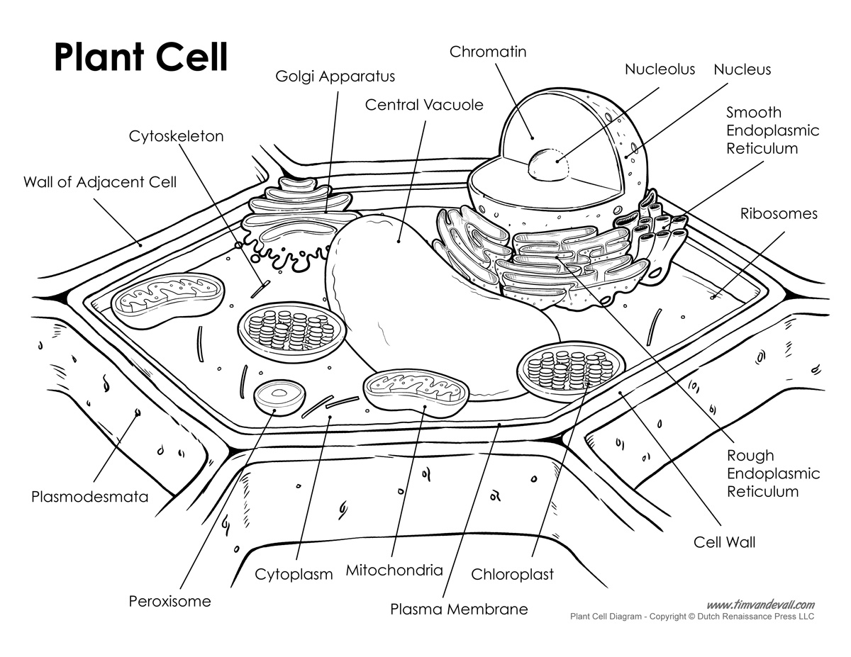 plant-cell-labeled - Tim's Printables