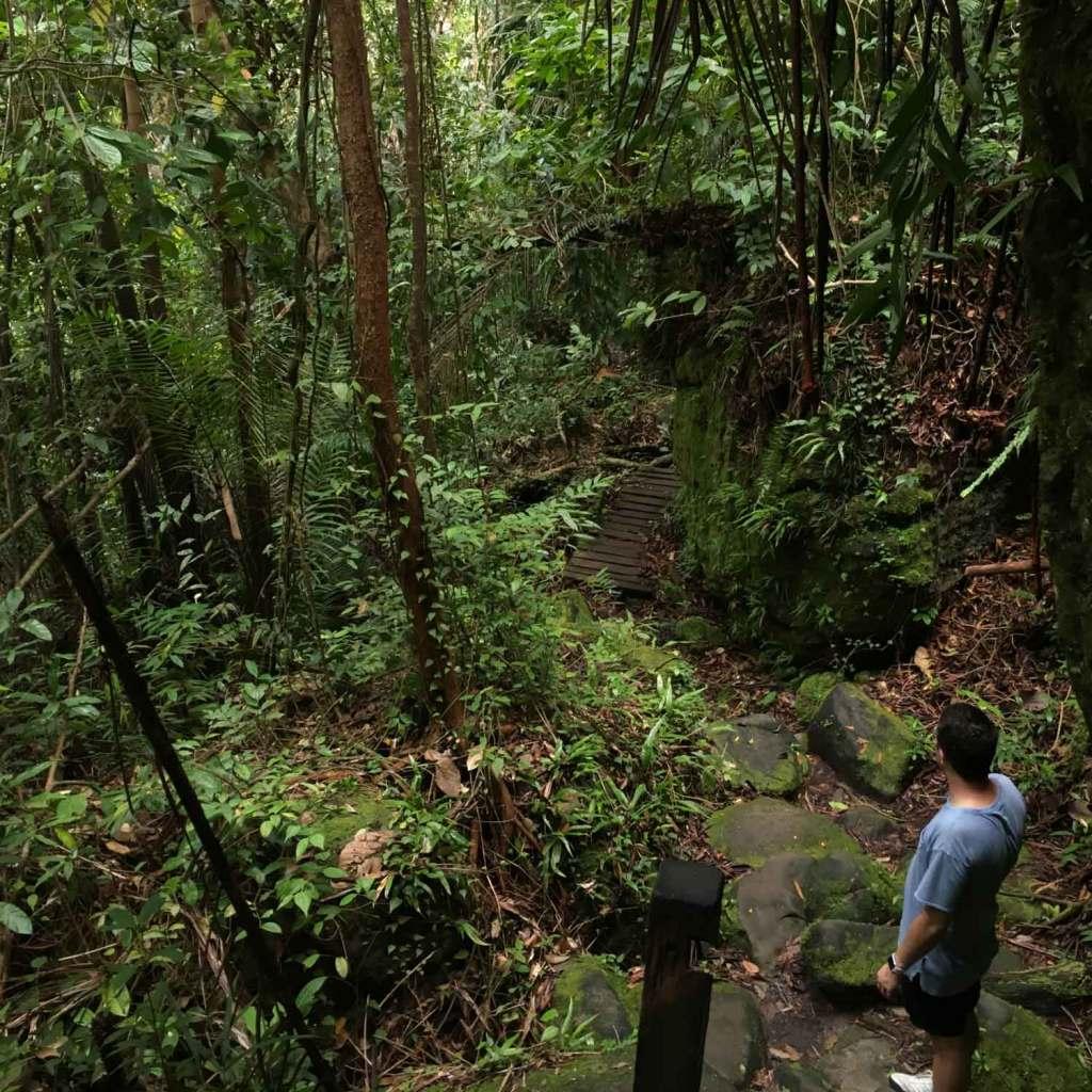 Kuching-Bako-Jungle-Tim