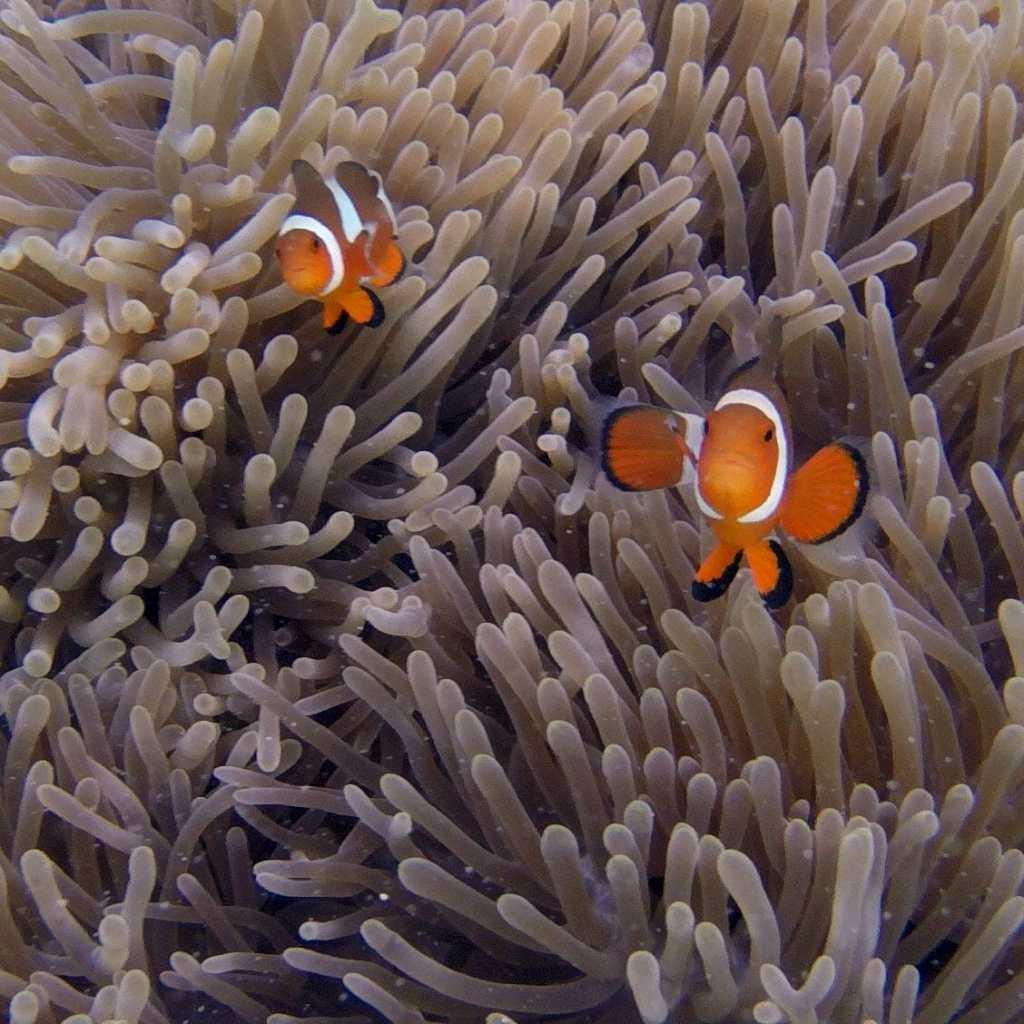 El-Nido-7-Commanders-Beach-Real-Nemo