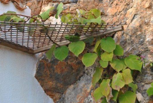 Mallorca kiwi