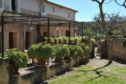 Mysig vingård