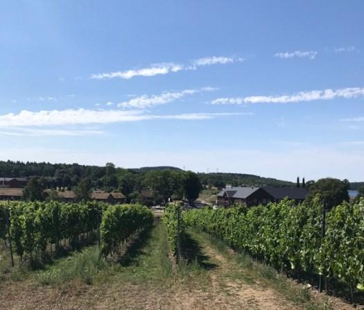 Vinfält i Sverige