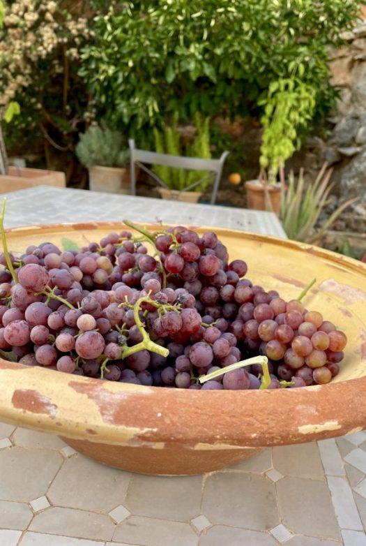 Mina vindruvor