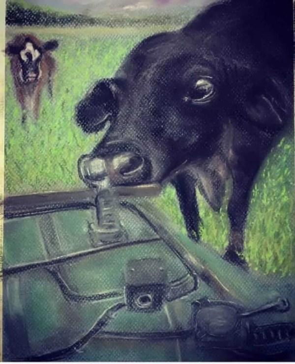 Curios Cow