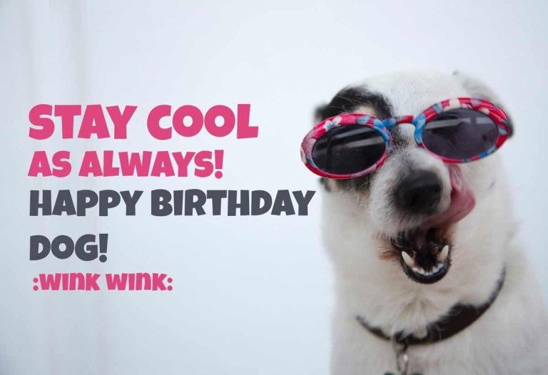 cool dog birthday meme happy birthday