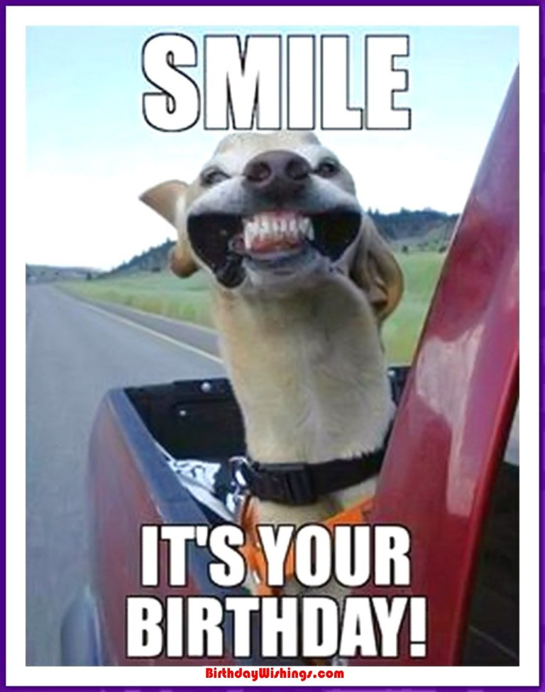 funny happy birthday memes with smiling dogs