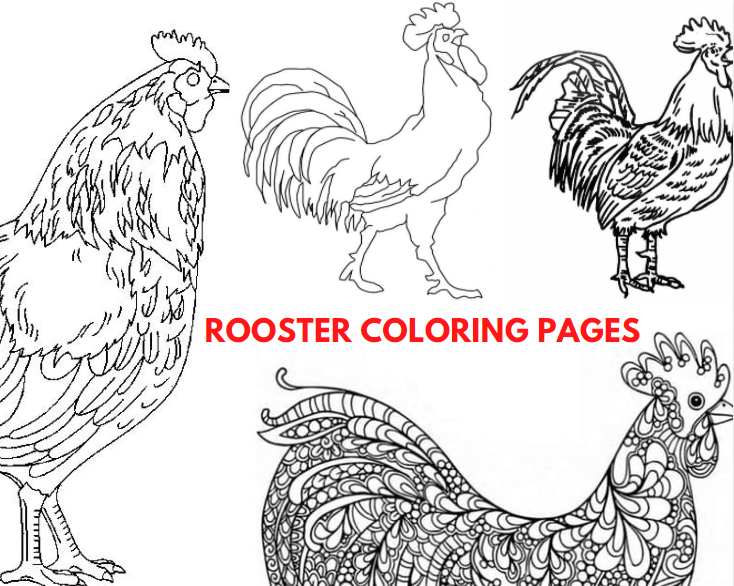 Rooster Pictures to Color