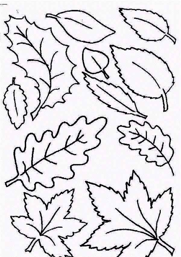 Fall Coloring Pages For Adults Leaves