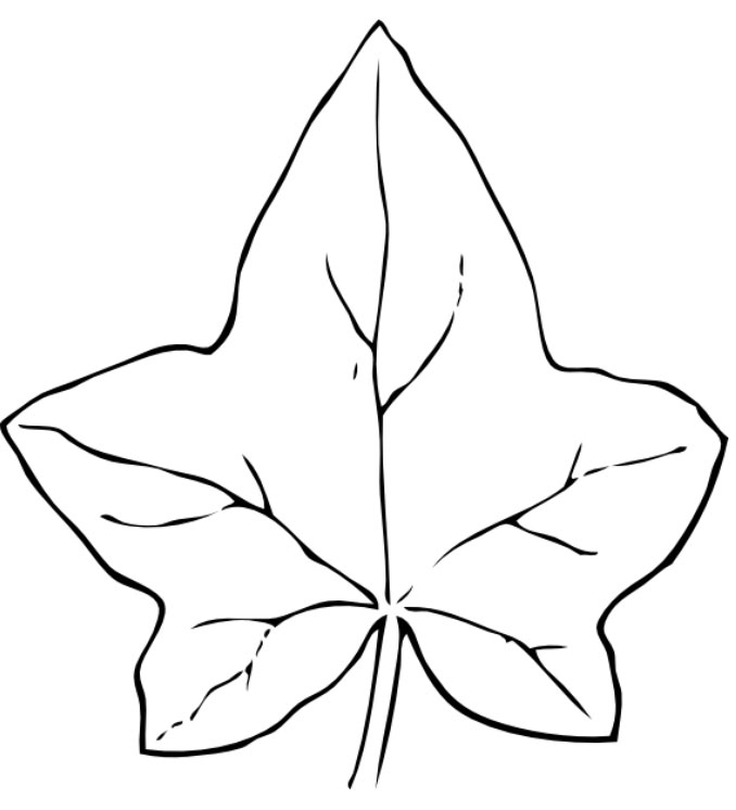 Fall Leaves Coloring Sheets