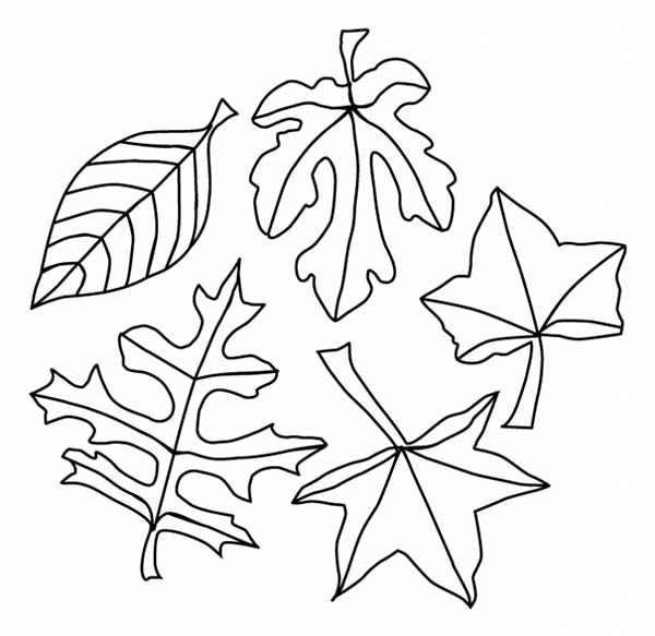 Leaves Coloring Free Downloads