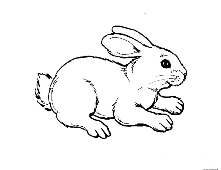small farm animal coloring pages