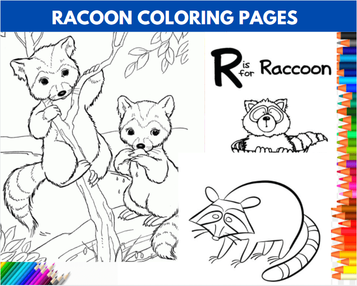 Free Racoon Coloring Pages