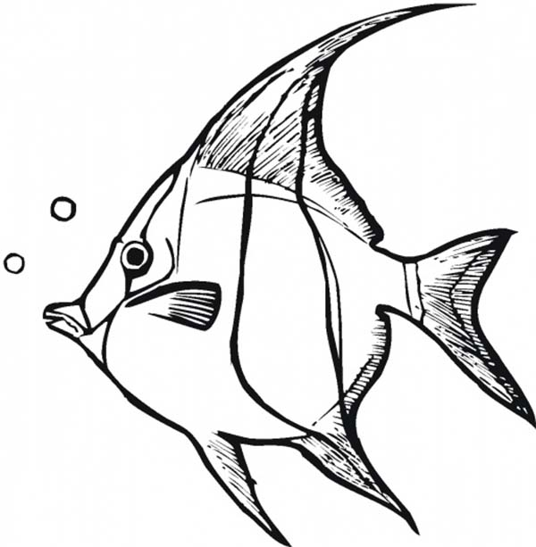 angel fish coloring page free downloads