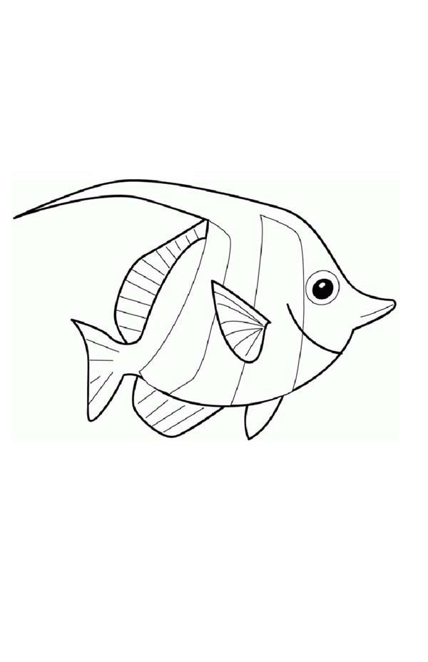 Angel Fish Coloring