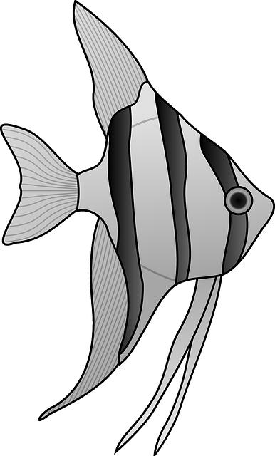 Angelfish Color