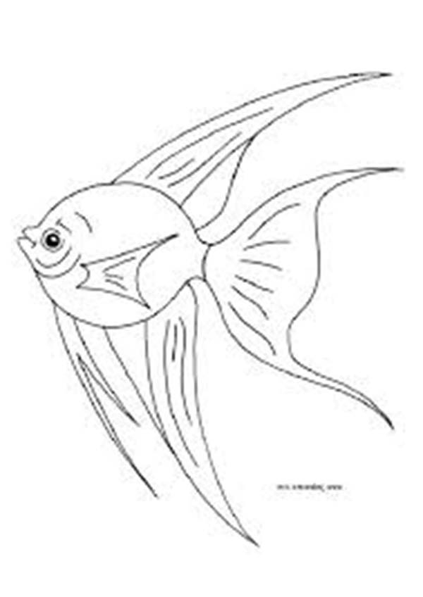 Angelfish Outline For Downloads