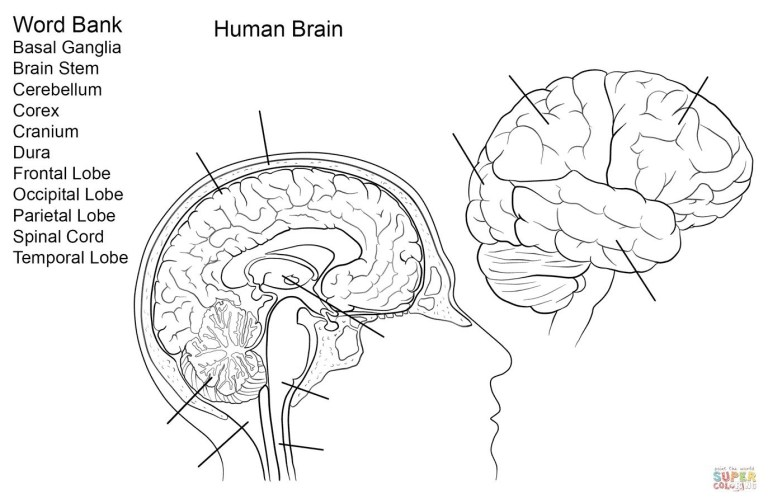 Brain Color Page