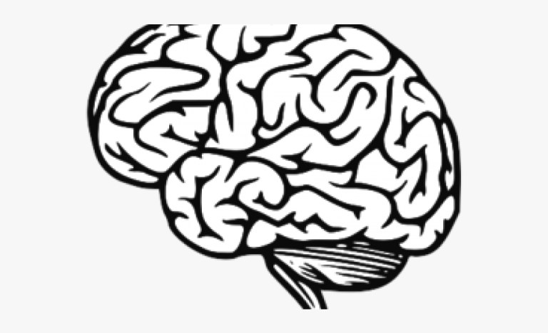 Brain Coloring Page With Labels