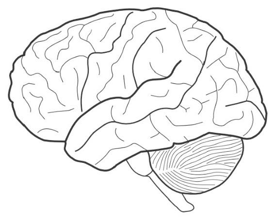 Brain Coloring Sheet