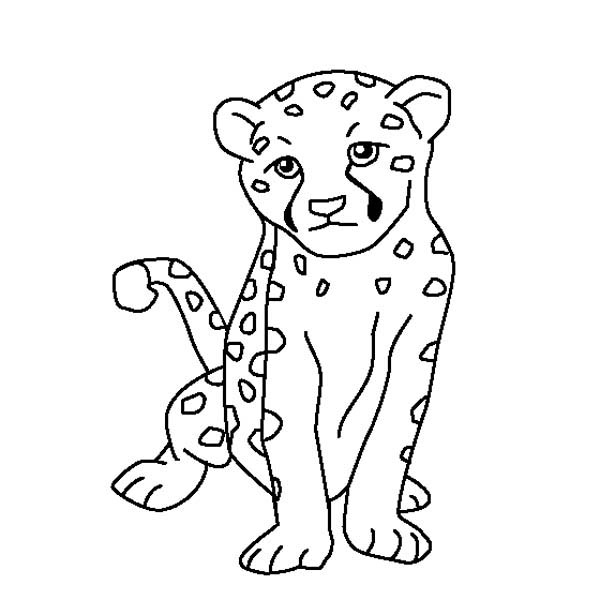 Cheetah To Color