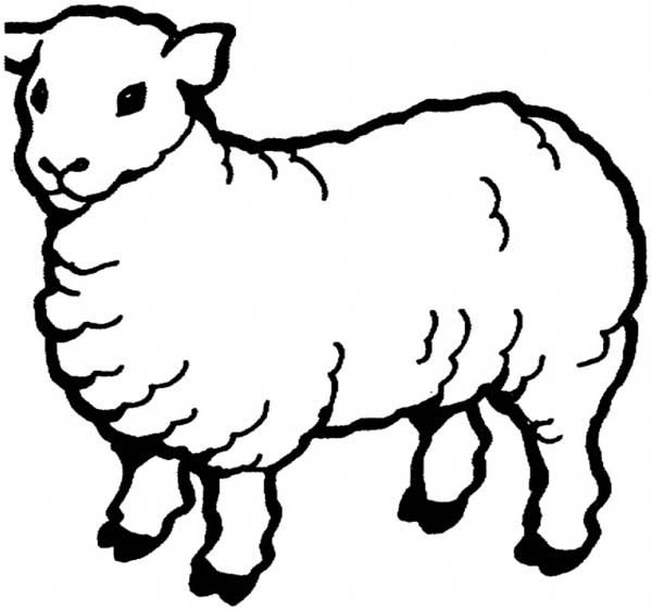 Coloring Page Of Sheep