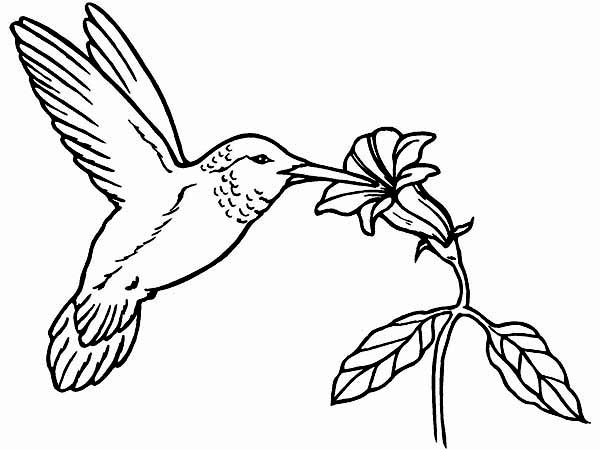 Coloring Picture Of Hummingbird