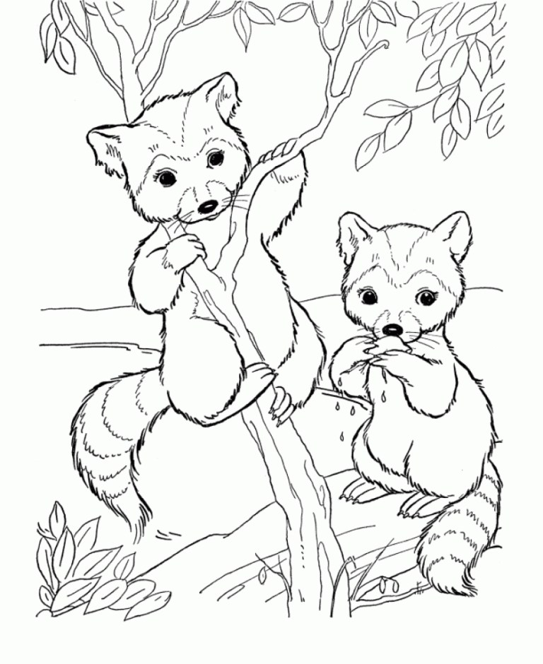 cute raccoon drawing for Kids