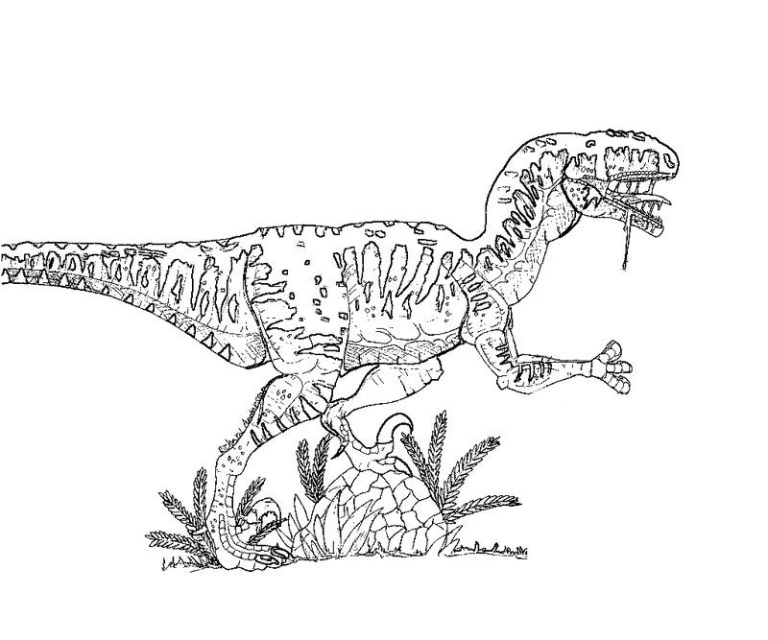 Dinosaur Raptor Coloring Pages