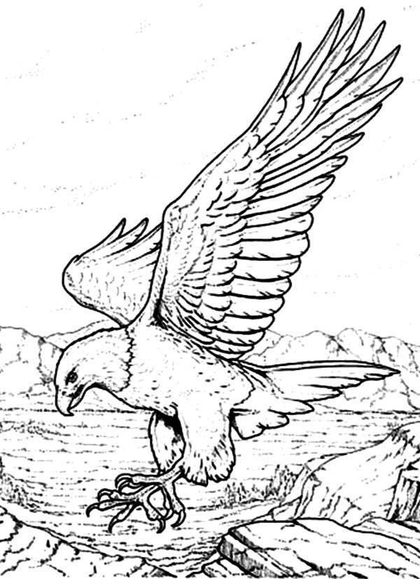 Eagle Coloring Sheet