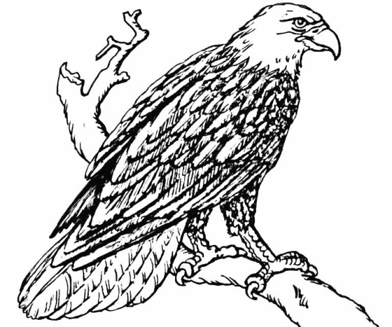 Eagle Colouring Sheets