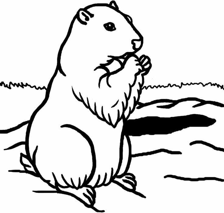 Groundhog Coloring Sheet