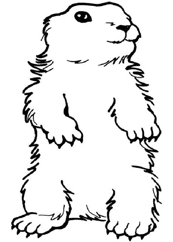 Groundhog Pictures To Color